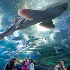 Under Water World Ticket with Free Transfer